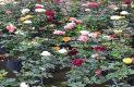 LA AMPLIA variedad floral que se puede encontrar en los viveros / Foto: Mildred Estrada