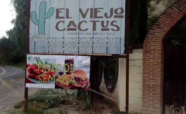viejo_cactus_1