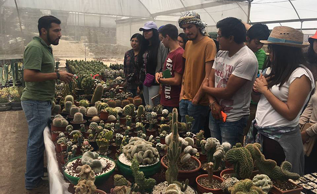 viejo_cactus_8