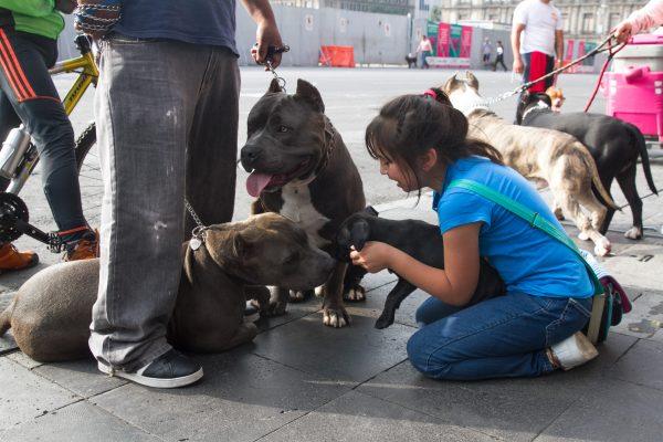 Pitbulls marcharon en México para mostrar que no son peligrosos