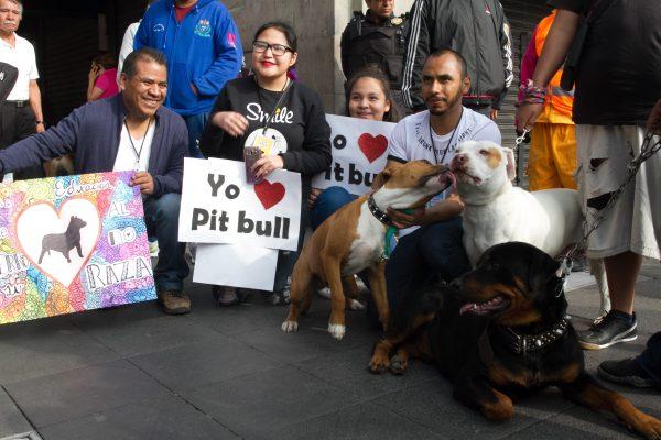 Realizan marcha en defensa de los Pitbull