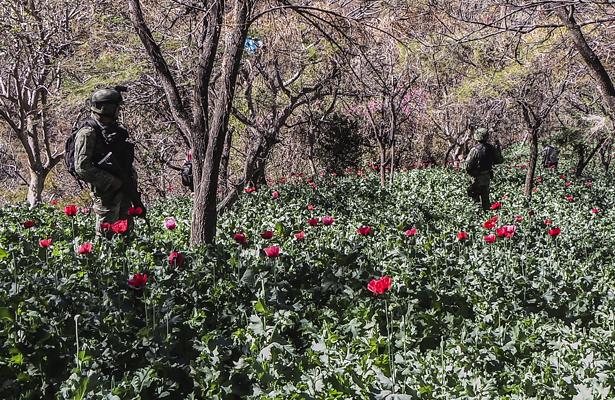 Kelly, Cienfuegos y Soberón sobrevuelan plantíos de amapola en Guerrero
