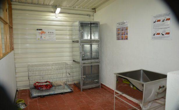 Inauguran albergue para perros rescatados en el Metro de la CDMX