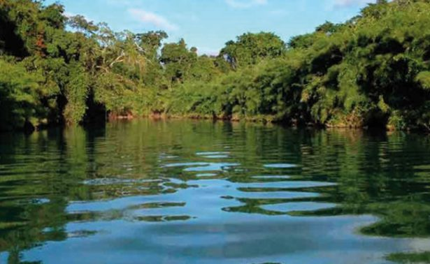 https://cdn.oem.com.mx/elsoldemexico/2017/08/%E2%80%9CEcocidio%E2%80%9D-en-Chiapas-obispo-Felipe-Arizmendi-615x378.jpg