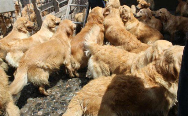 Rescatan a 38 perros de criadero clandestino en Iztapalapa