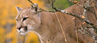 Detectan especies en peligro de extinción