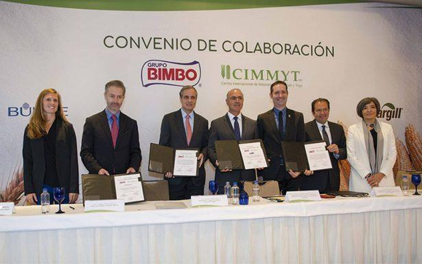 Bimbo adquirirá 75 mil toneladas anuales de granos sustentables