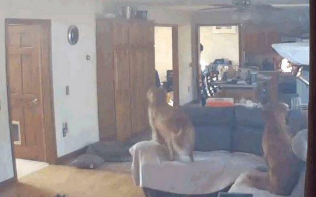 [Video] Por panquecitos, perro casi incendia la casa de sus dueños
