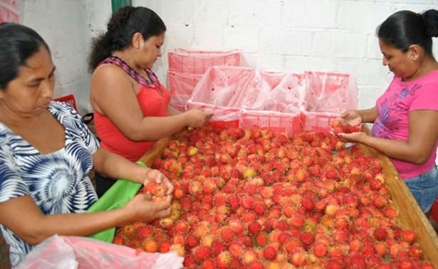 Prepara Chiapas embarque de rambután hacia Dubai