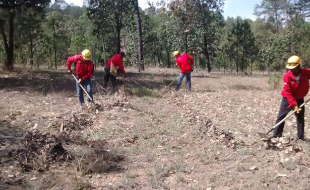 Lluvias sofocaron incendios forestales
