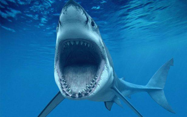 Hombre va de pesca y termina luchando contra un tiburón