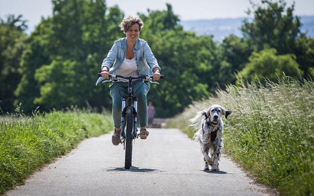 Como cuidar y divertirse si paseas en bicicleta con tu mascota