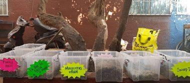 Detienen a 19 vinculados en venta de mariguana 'gourmet' en Tepito