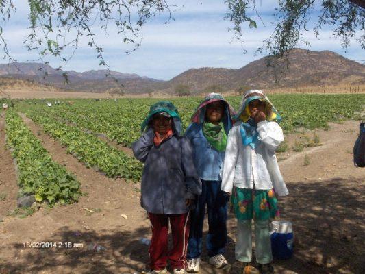 Salvaguardar a niños indígenas y combatir desnutrición