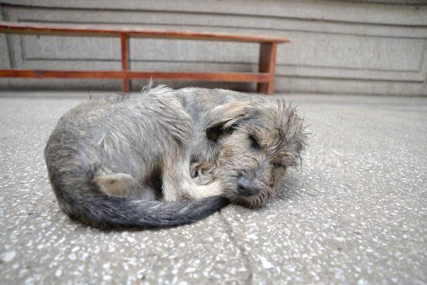 Cacería de perros en Purépero