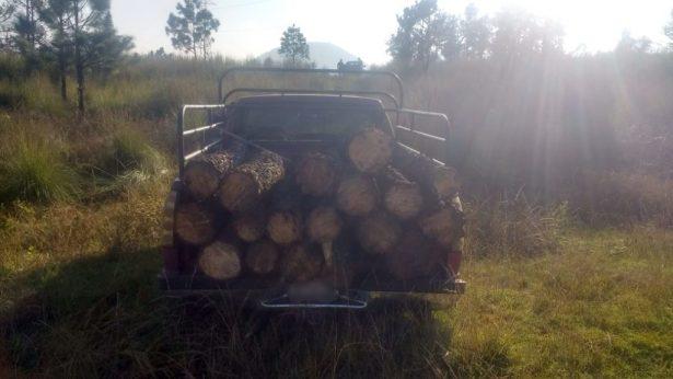 Asegura SSP a cuatro con madera ilegal en Paracho
