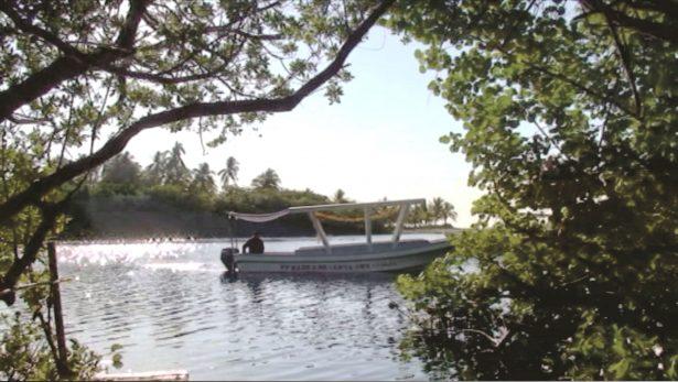 Green Peace señala pérdida de manglares