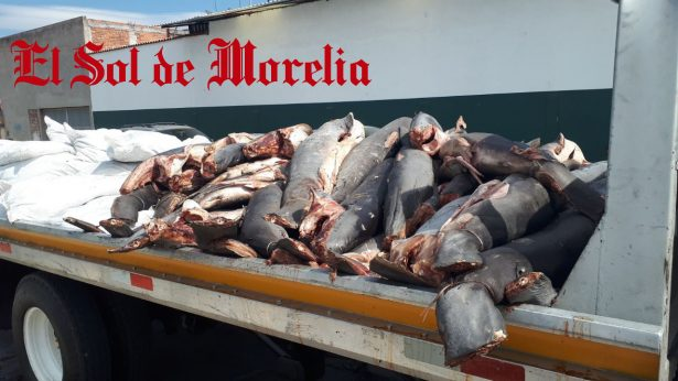 Encuentran 300 cadáveres de tiburones abandonados en la carretera