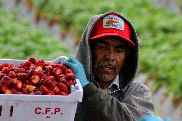 Migrantes desconocen derecho a pensionarse por el gobierno de EU