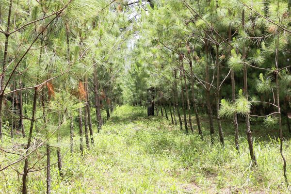 Comienza programa de Reforestación 2018