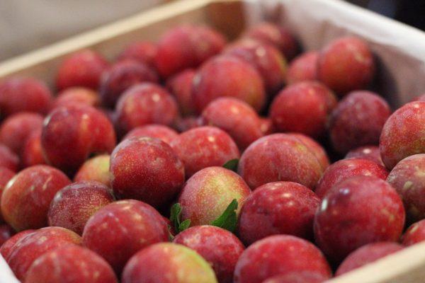 Invita Jeráhuaro a conocer su producción frutícola