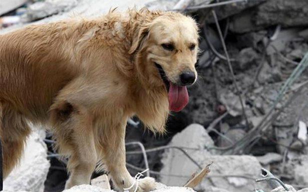 Darán 'calaverita' a perros damnificados por el sismo