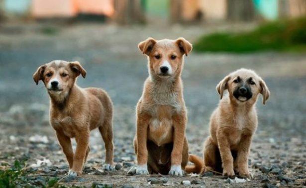 Reos podrían rehabilitarse con perros callejeros 🐶