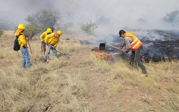 Año crítico para los bosques en Chihuahua
