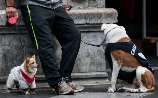 ¿Intenso frío? Te damos consejos para proteger a tus perros y gatos
