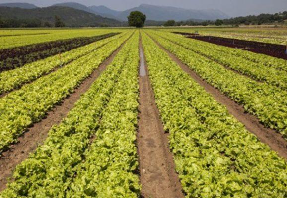 Pagará Sagarpa adeudos a soyeros de Chiapas