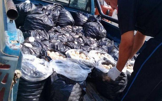 Detienen a conductor con más de 20 mil huevos de tortuga en Oaxaca