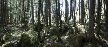 Hallan sano y salvo a niño de dos años tras pasar tres días perdido en un bosque