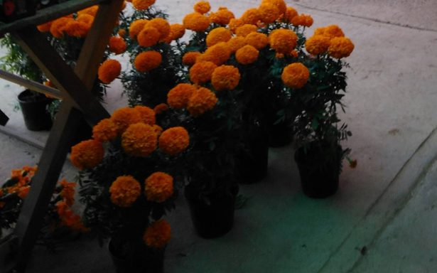 Comercio en Tampico listo para el Día de Muertos