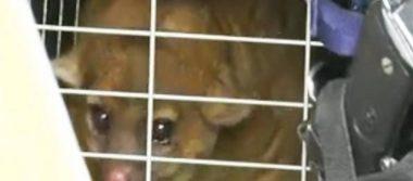 [Video] Martucha sorprende a vecinos de Aragón; el animal dormía en la azotea de una casa