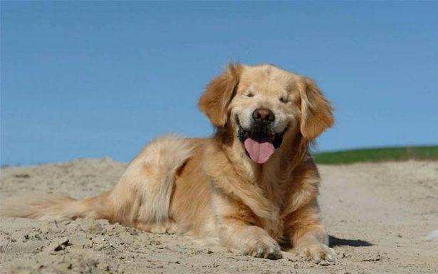 Smiley, el perro que nació ciego, muere tras perder contra el cáncer