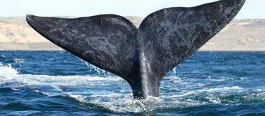 El avistamiento de ballenas en México está a punto de comenzar, ¡conoce las fechas!