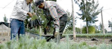 Federación destinó $160  millones para conservación  y protección de bosques