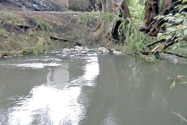 Plantarán Ahuehuetes  en el Río Blanco