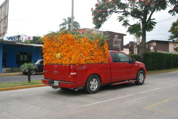 Repunta 30 por ciento la venta de flor de muerto en Orizaba.