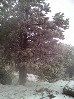 Vienen más nevadas para la zona del Pico de Orizaba