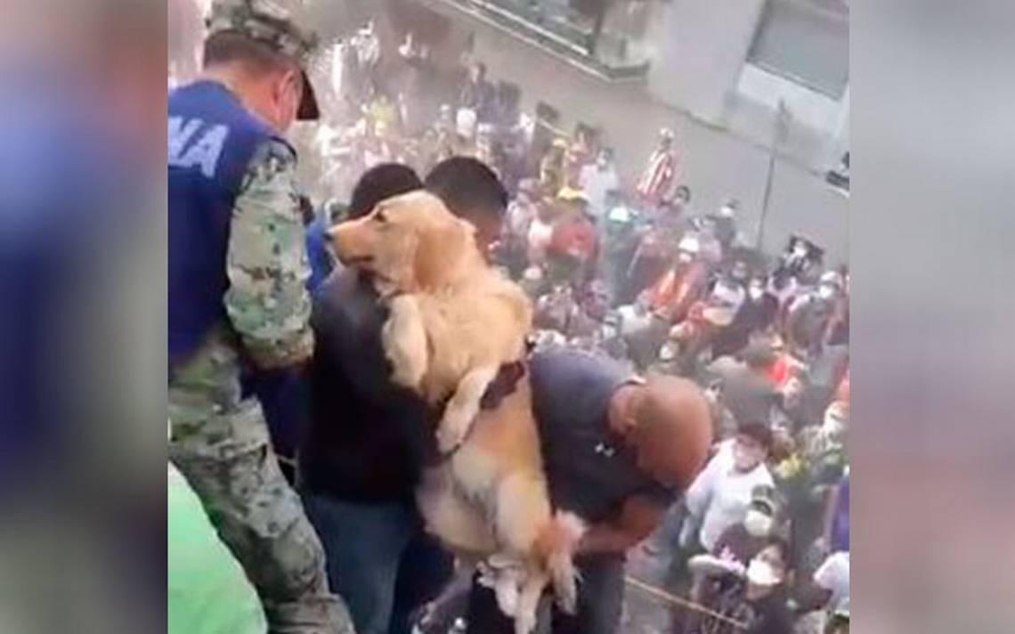 Rescate de perro conmueve en redes tras terremoto en la CDMX