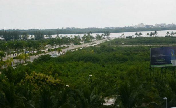 Tribunal ordena a Semarnat reforestar manglar de Tajamar