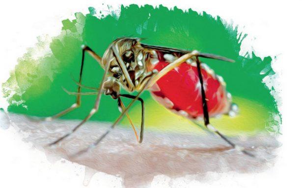 Alistan vacuna contra zika; podrá ser distribuida en 3 años