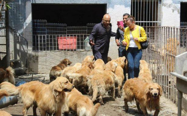 Perros rescatados de criadero de Iztapalapa tienen los colmillos limados