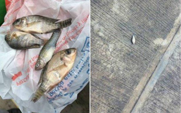 ¡Insólito! Llueven peces en Tampico