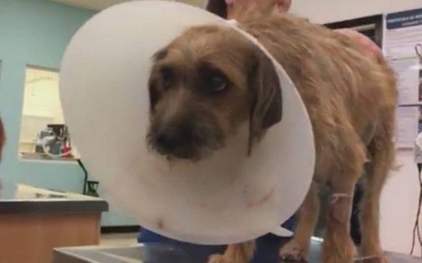 Mugrosita y el milagro de un rescate que dio vida a 10 perritos