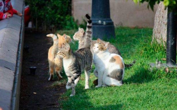 Los gatos, las mascotas que más sufren agresiones humanas por supersticiones