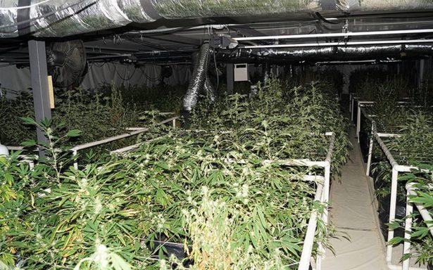 Localizan en Lerma laboratorio de marihuana