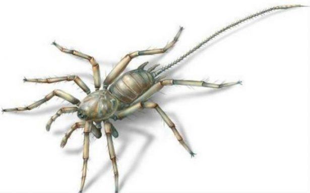 Descubren una extraña y antigua araña con cola