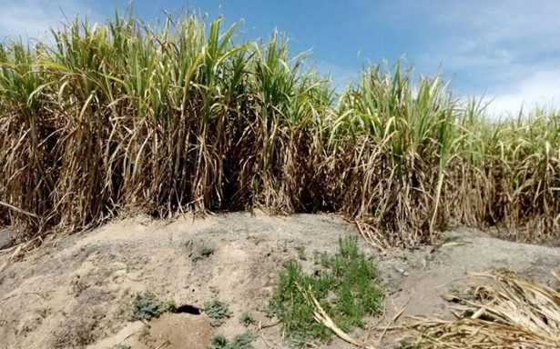 Encuentran séptima fosa clandestina en Nayarit